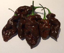 100 graines Hot Chilli Pepper-habanero chocolat