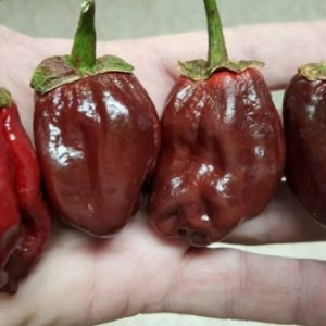 Chilli Pepper Seeds Buy The Best Hot UK Chillies Online