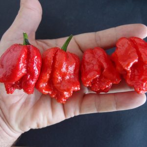 Hot Chilli Pepper Seeds Chilli Sauces the hottest products